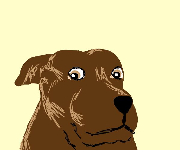 Shocked dog