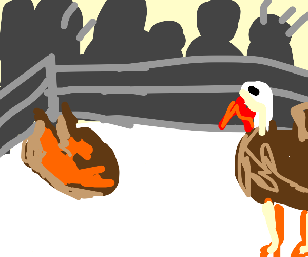 turkey in a boxing ring