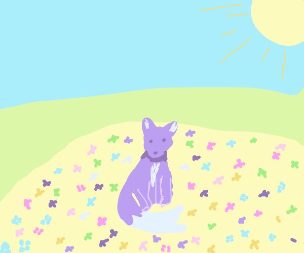 Purple fox sitting in a flower field