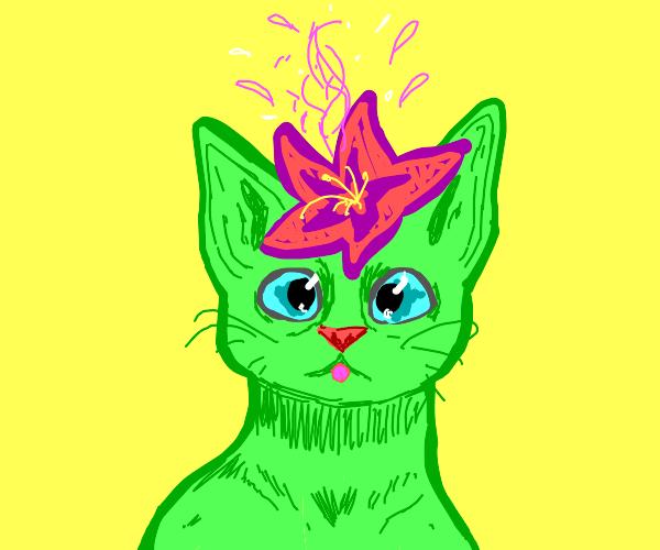 Flower growing on a cat's head