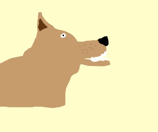 Menacing dog