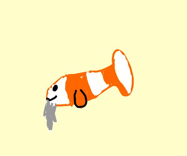 old clown fish