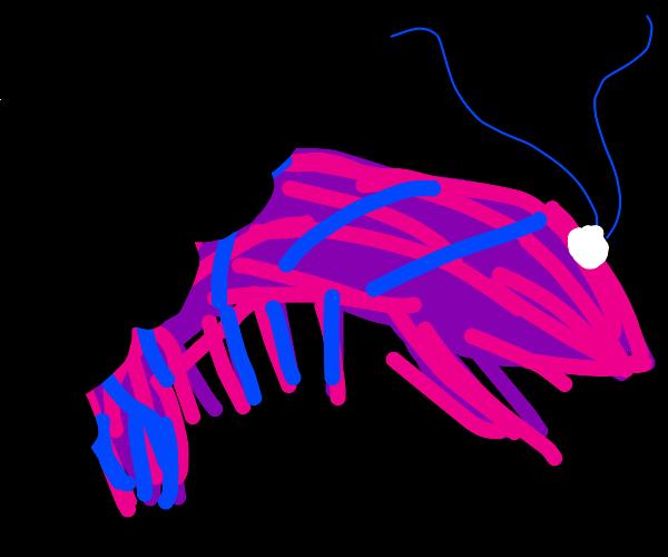 Gummy Shrimp
