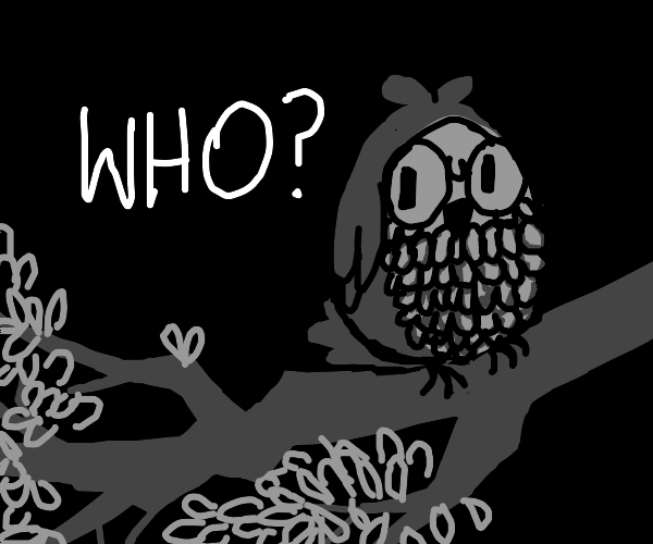 Owl asks who