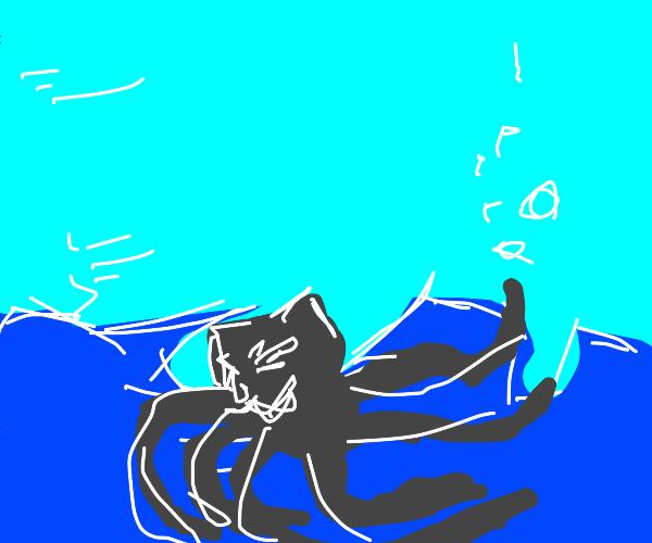 cat squid
