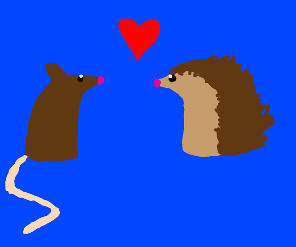 Rat and porcupine in love