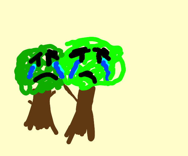 2 trees cry with their canopies intertwined