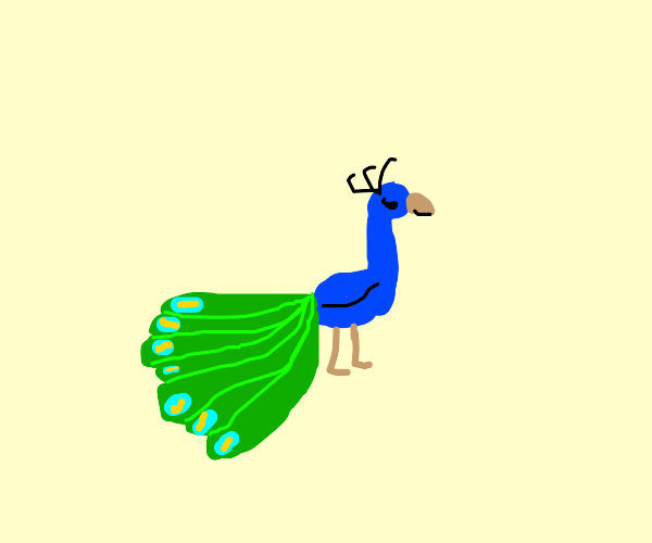 Peacock of your Dreams