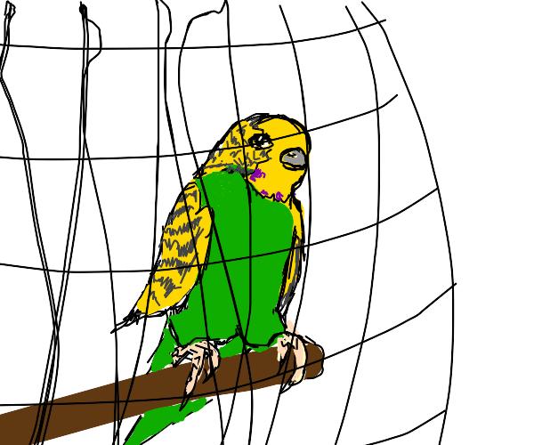 Pet Parakeet
