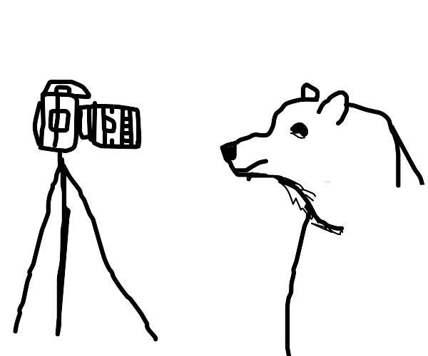 Bear looks at a camera