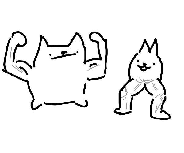 Very muscular cats