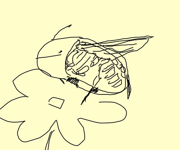 bee bones