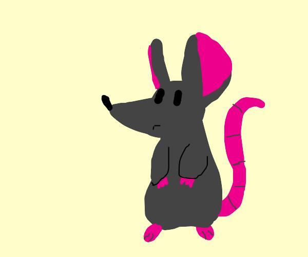 Adorable rat sitting up