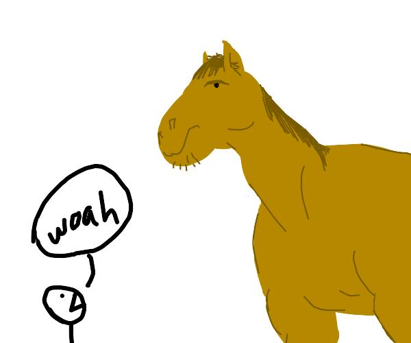 That's a big horse bro