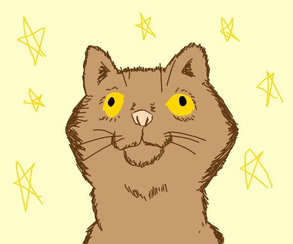 A up close cat with stars all aroumd