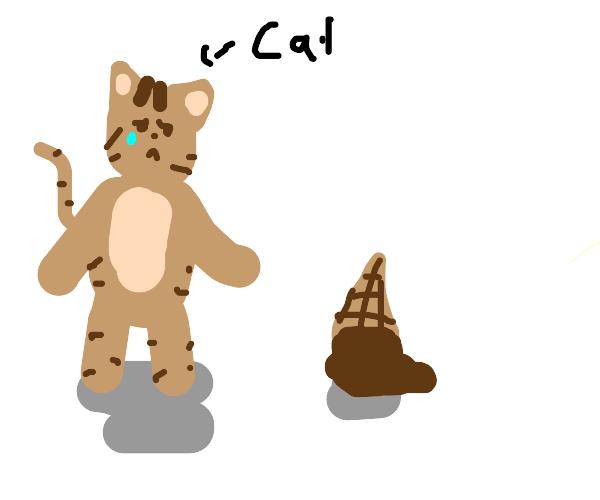 the cats icecream fell :(