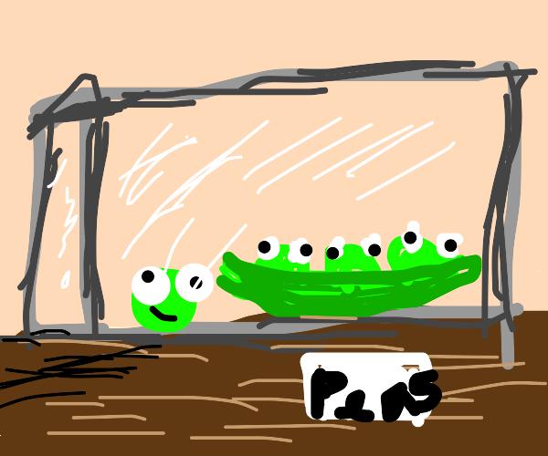 Pet Peas
