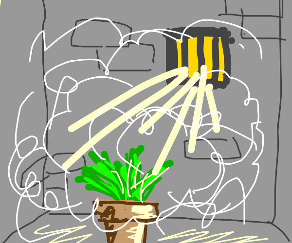 Steamy plant cell
