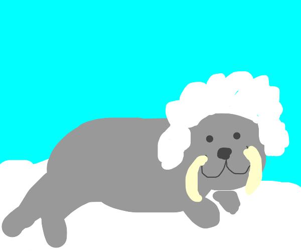 Walrus  with white hair