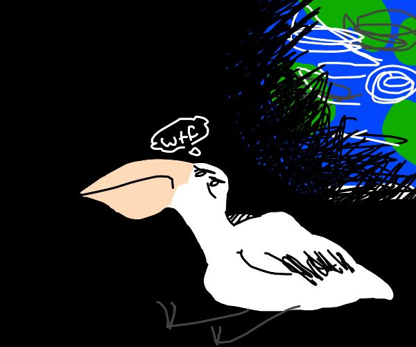 Space Pelican