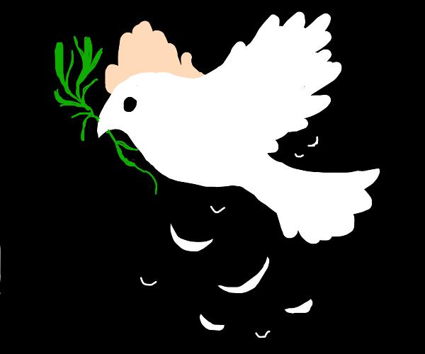 bird of peace aka dove
