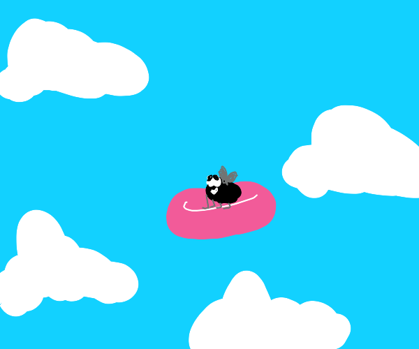 Fly rides a Frisbee