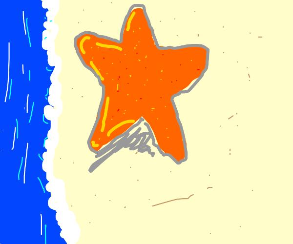 Star fish standing on beach
