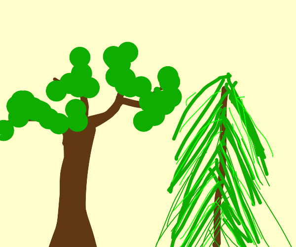 A tree with some leaves and a pine tree