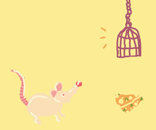 pale rat paying atention to cage above cheese