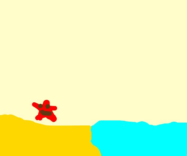 a starfish near the sea
