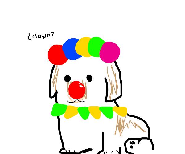 Circus pupper