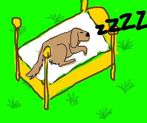 Dog sleeping on bed outside in grass