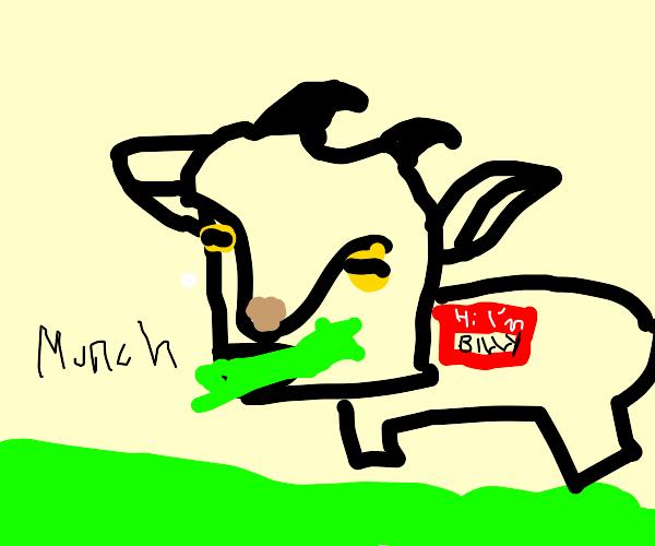 goat eating grass