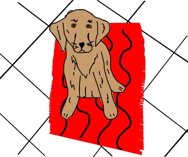 Dog on a rug