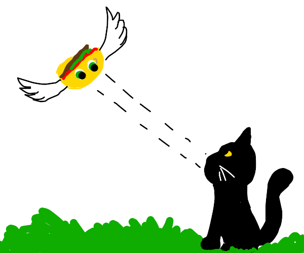 Flying taco stares down at black cat