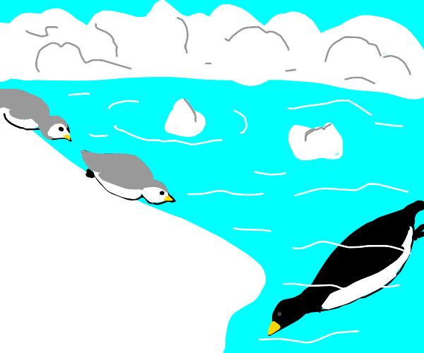 2 penguins having fun sliding,mother swimming