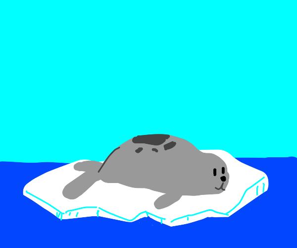 Seal is big