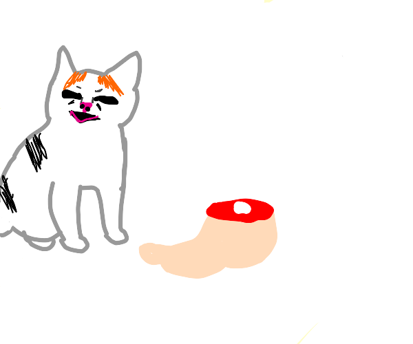 Angry cat hates bare, human feet