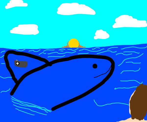 Blue Whale Photographer