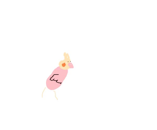 a cute small cockatiel