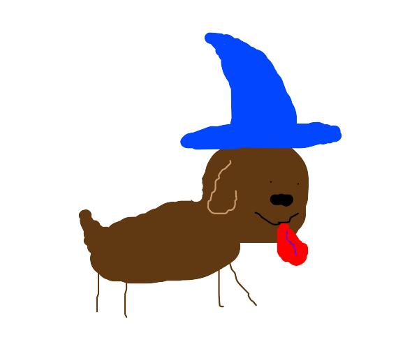 Cute dog wizard