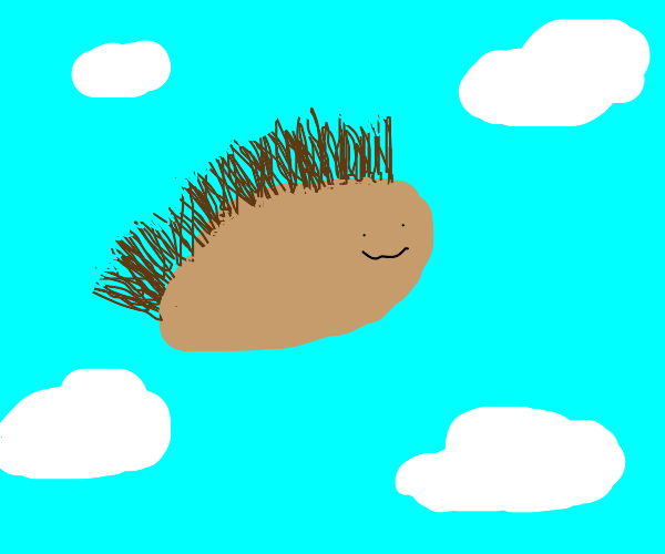 Flying hedgehog