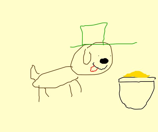 Leprechaun Dog