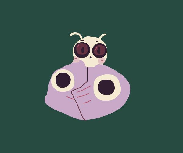 cute chubby owl-moth