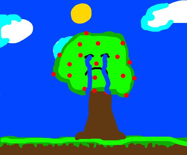 Unhappy cherry tree