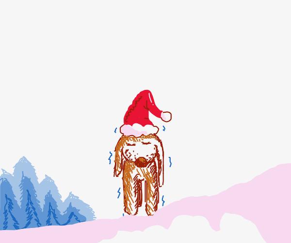 Brown Dog wearing a santa hat and shaking