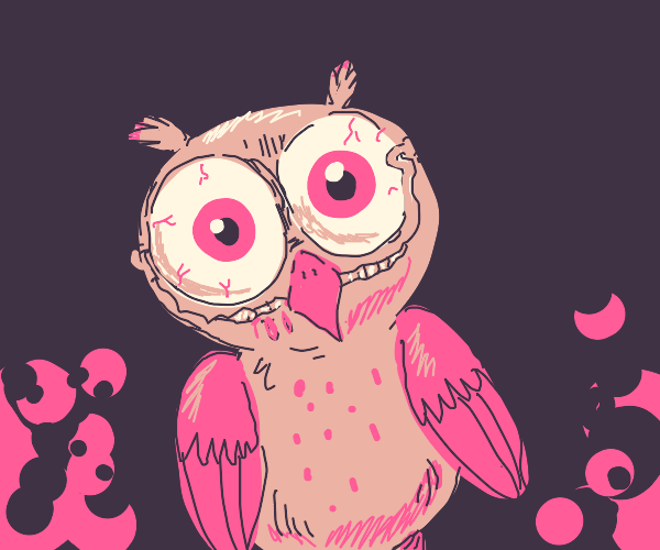 unsettling owl?