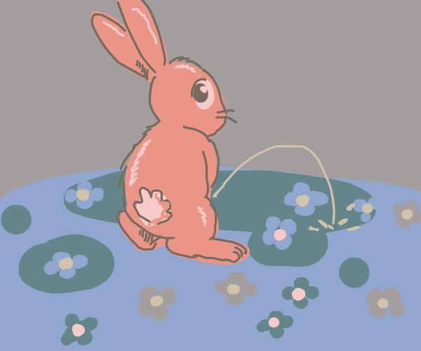 Rabbit pisses in field of flowers