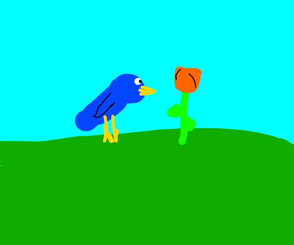 Blue bird looks at tulip