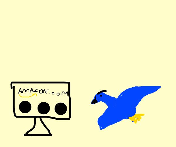 bird cant enter amazon.com